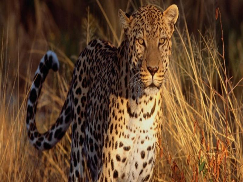 Ranthambore - Jungle Safari with full adventure