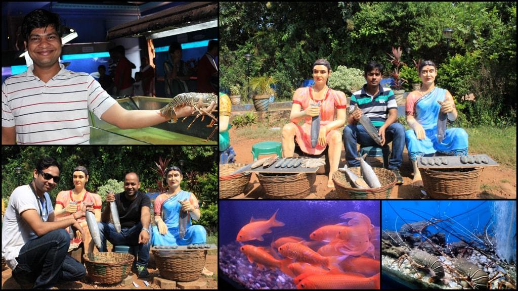 fish aquarium on the way to North Goa