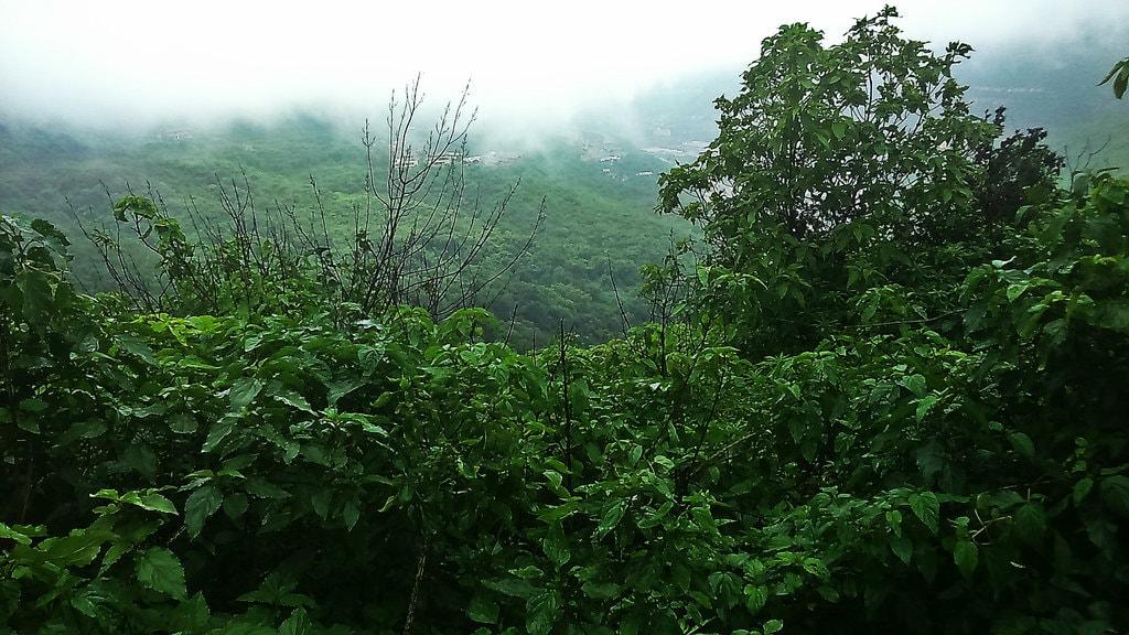 lush green landscape in Lavasa