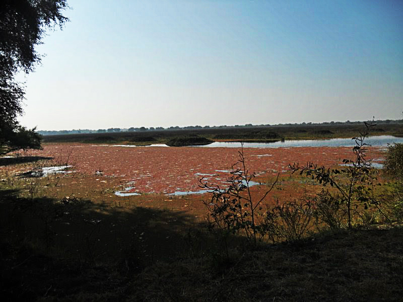 Park wetland