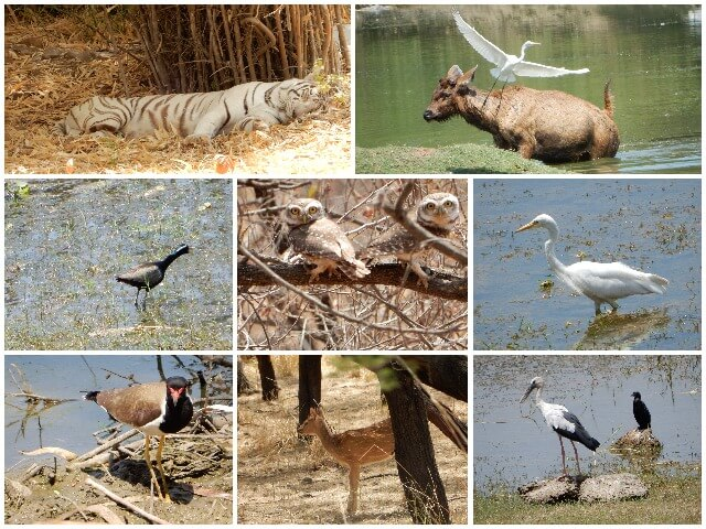 Some photos from Van Vihar National Park, Bhopal