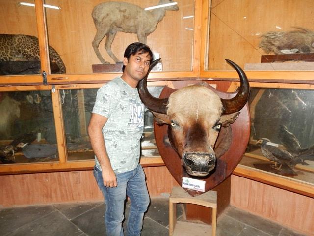 inside Kufri Zoo Museum