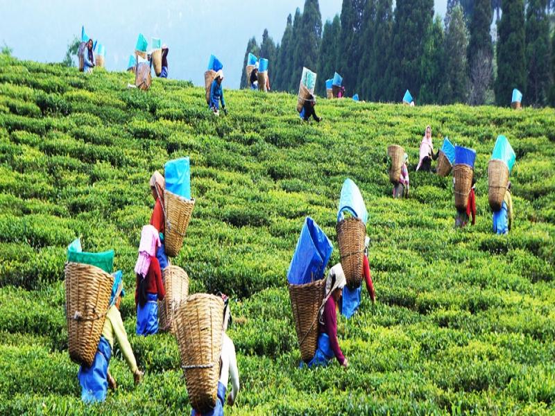 Assam, India