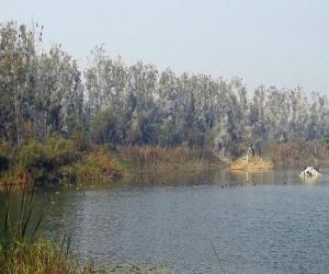 Yamuna Biodiversity Park Delhi