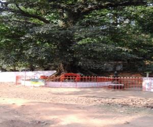 Chain Tree Wayanad