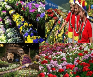 International Flower Festival